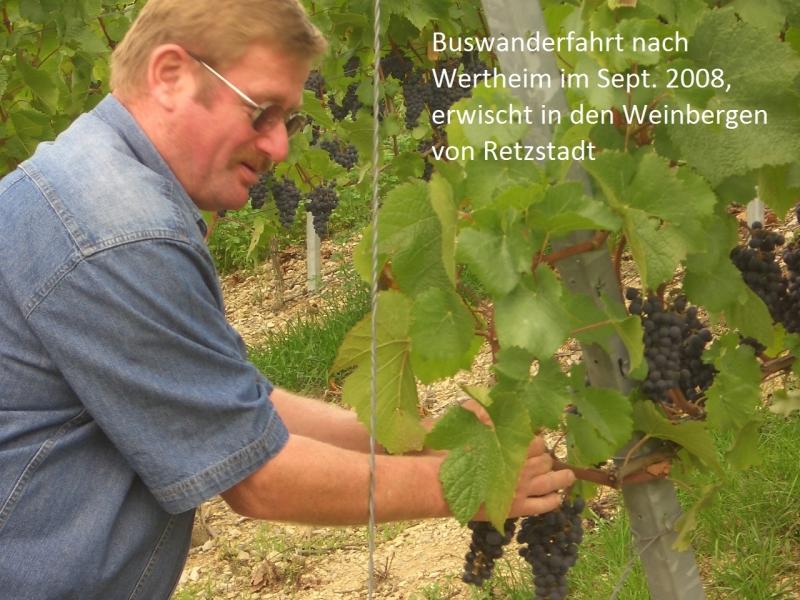 2008-09-Wertheim.Sept.08 006
